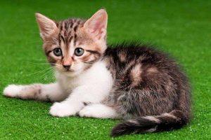 segurança dos animais de estimação