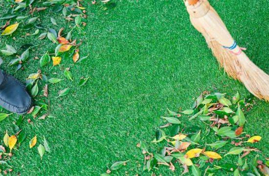 dicas de preservação de grama