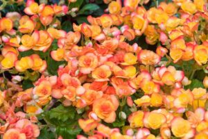 flores distribuídas no jardim de inverno com grama sintética