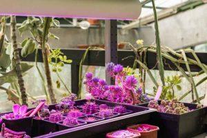 Suculentas plantadas no jardim de inverno com grama sintética