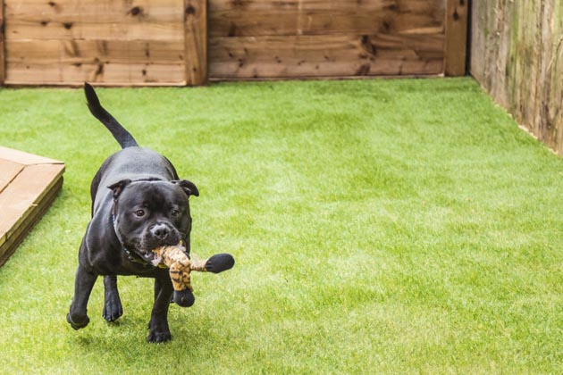 cachorro brincando em espaço pet friendly com grama sintética