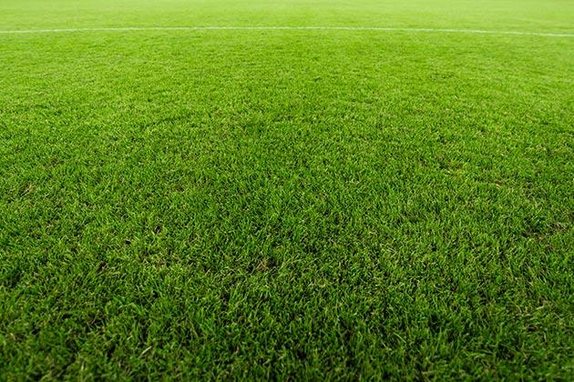 Vemos um gramado. Entenda qual a base para instalar grama sintética!