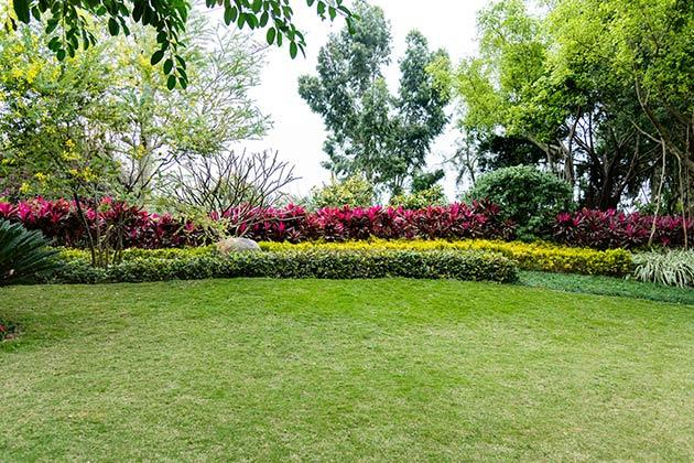Vemos o uso de grama sintética para jardim. Conheça as vantagens!